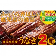 【A43052】鹿児島の逸品!うなぎ2尾