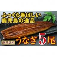 【B43032】鹿児島の逸品!うなぎ5尾