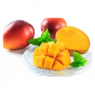 【E14003】鹿児島完熟マンゴー 定期お届けコース(生&冷凍)