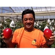 【沖縄県認定農業指導士が蜜蜂とつくった大自然のアップルマンゴー】約4kg