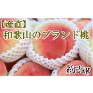 【産直】和歌山のブランド桃約2kg・秀選品