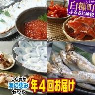 しらぬか海の恵みセット【年4回定期便】