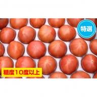 <2019年6月下旬よりお届け>【特選・糖度10度以上】北海道壮瞥産 こだわりフルーツトマト(20玉以上)