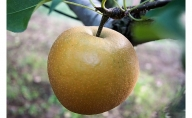 しろいの梨 新興 5kg