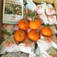 【期間限定】高糖度!プレミアム越冬完熟袋掛けみかん 約3kg