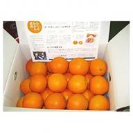 香川県産ネーブルオレンジ