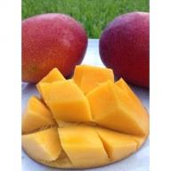 【沖縄県認定農業指導士が蜜蜂とつくった大自然のアップルマンゴー】約3.1kg