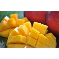常夏西表島の太陽をいっぱいに浴びた!!完熟アップルマンゴー1.5kg