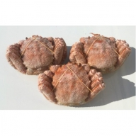 浜ゆで毛がに(3尾セット) 1.3kg