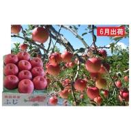 6月 冷た~い最高級ふじりんご約3kg・特選クラス