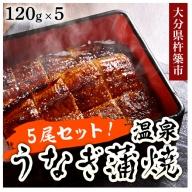 C1001 温泉うなぎ蒲焼 5尾セット