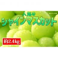 ☆先行予約【新鮮果実】人気のシャインマスカット 約2.4kg