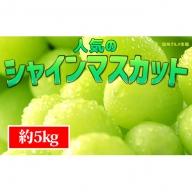 ☆先行予約【新鮮果実】人気のシャインマスカット 約5kg