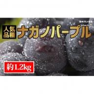 ☆先行予約≪人気の皮ごと≫ナガノパープル 約1.2kg(2~4房)
