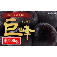 ☆先行予約【人気のブドウ】巨峰 約1.8kg(3~5房)