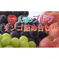 ☆先行予約【信州の味覚】人気のブドウ2種&旬のリンゴの詰合せ