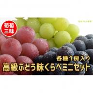 ☆先行予約 葡萄三昧 高級ぶどう味くらべミニセット(3種各1房)