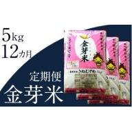 80-SS-7 BG無洗米・金芽米【定期】きぬむすめ 5kg/12ヵ月