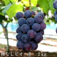 13-JY-6 種なしピオーネ 2kg【8月下旬~10月初旬発送】