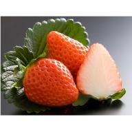 イチゴ(さがほのか)270g×8パック
