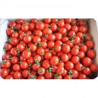 完熟 ミニトマト(キャロルセブン)約2kg トマト農家直送 和歌山県産