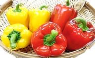 【期間限定☆】果肉が厚く旨味が濃い 天龍産パプリカ6個セット
