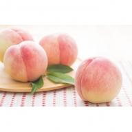 錦の水蜜桃4kg(12玉~15玉)