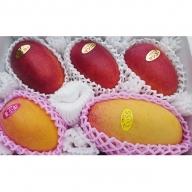 ますみ農園 3種のマンゴー食べ比べセット