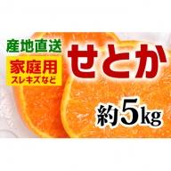 【産地直送】家庭用 せとか 約5kg(S~3L)