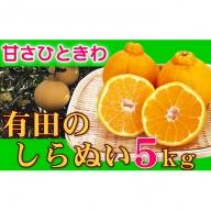 【サイズおまかせ】丹精込めた有田のしらぬい(不知火)5kg