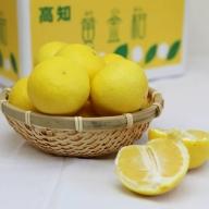B-180 間城農園 爽やかな香りの黄金柑(おうごんかん)2.5kg