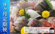 本州配送限定 産地直送 氷見漁港 朝どれ鮮魚お刺身セット定期便9ヶ月連続