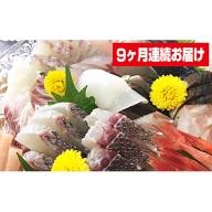 本州配送限定 産地直送  朝どれ氷見産鮮魚お刺身セット定期便9ヶ月連続