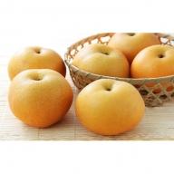 錦の梨(5kg 10玉~12玉)