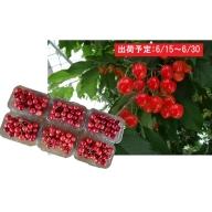 山形県産「佐藤錦」1.2kg秀品(200g×6)Lサイズ