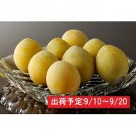 最高級大玉プラム「光李(ひかり)」約2kg 大江町産