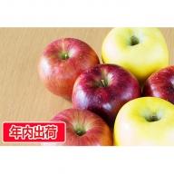 ご自宅用旬のりんご詰合せ約10kg(サンふじ確約3~4種)大江町産