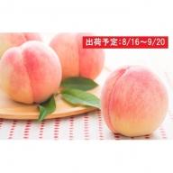 山形県産 「白桃」約5kg・秀品18~20玉