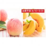 山形県産 徳用桃約6kg(約3kg×2箱)