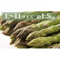 【L~LLサイズ 約1.5kg】グリーンアスパラ・北海道千歳産