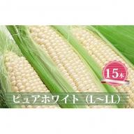 【L~LLサイズ15本】白いとうもろこし「ピュアホワイト」北海道千歳産