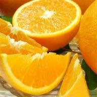 バレンシアオレンジ[約5kg]湯浅町田村産春みかん/紀伊国屋文左衛門本舗