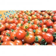 3kg!はなまる農園のミニトマト