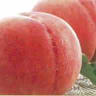 E-00119 山形県産種類おまかせ白桃5kg