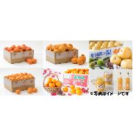 Z0006 石児さんちのフルーツ定期便C(8月・9月・10月・11月・12月・1月・2月・3月)