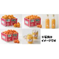 Z0005 野菜ソムリエ石児さんが育てたフルーツ定期便B(12月・1月・2月・3月)