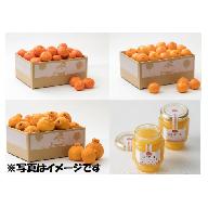 Z0004 石児さんちのフルーツ定期便A(12月・1月・2月・3月)