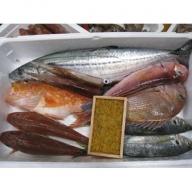 01A-005 山口県漁協大海の海の幸セット(年4回コース)