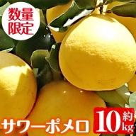 No.357 【数量限定】サワーポメロ《柑橘類のフルーツ》(約10kg・満杯詰め) 初夏にぴったりのみかんです!そのままでもサラダやハイボールにも!【大庭商店】