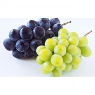 農園直送 山梨県産ブドウ詰め合わせセット(2kg 3房)